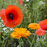 Poppies In The Wild Poster