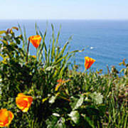 Poppies On The Pacific Poster