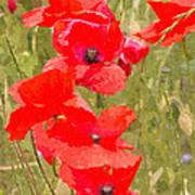 Poppies Vi Poster