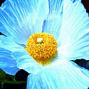 Poppy 8 Poster