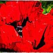 Giant Poppy Art  Poster