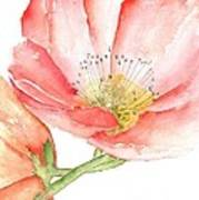 Poppy Bloom Poster by Sherry Harradence