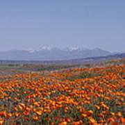 Poppy Land Poster
