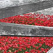 Poppy Memorial Tower Of London Poster