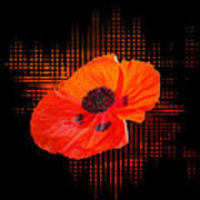 Poppy Passion Square Poster