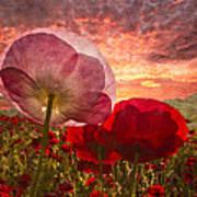 Poppy Sunrise Poster by Debra and Dave Vanderlaan