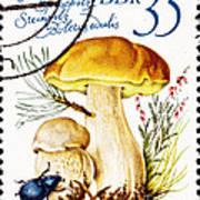 Porcini Mushroom Boletus Edulis Poster