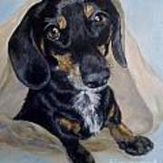 Dachshund Dog Poster