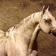 Portait Of A Stallion Poster