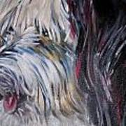 Portrait Of A Happy Shaggy Dog Poster