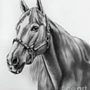Portrait Of A Horse Poster