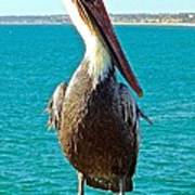 Portrait Of A Perky Pelican Poster by Brian D Meredith