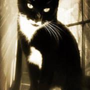 Portrait Of A Tuxedo Cat Iv Poster
