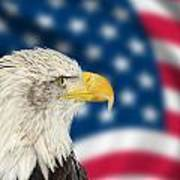 Portrait Of American Bald Eagle Against Usa Flag Stars And Strip Poster