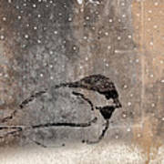Postcard Chickadee In The Snow Poster
