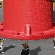 Postcards From Otis - The Hydrant Poster