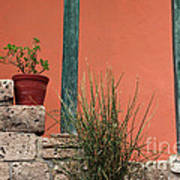 Pot Plants Poster