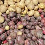 Potato Variety Display Poster