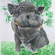 Potbellied Pig Pet Portraits Watercolor Memorial Made To Order 5x7 Inch Poster