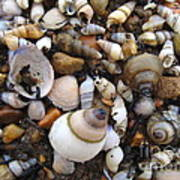 Potomac Shellscape Poster
