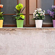 Potted Flowers 01 Poster by Rick Piper Photography