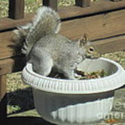 Potted Squirrel Poster