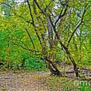 Poudre Trees-2 Poster by Baywest Imaging