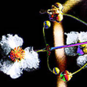 Powder Flower Poster