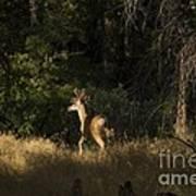 pr 140 -Deer in the Grass Poster