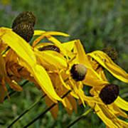 Prairie Flowers In Wind Poster