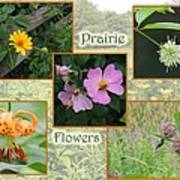 Prairie Flowers Poster
