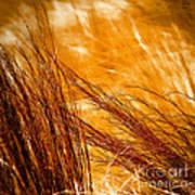 Prairie Winds Poster