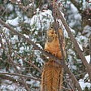 Praying Squirrel  Poster