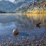 Preening Ducks At Silver Lake Poster