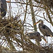 Preparing The Nest Poster