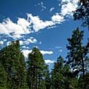 Prescott National Forest Spring Skies Poster