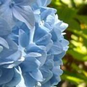 Pretty Blue Flower Poster