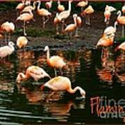 Pretty Flamingos Poster