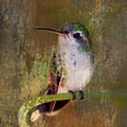 Pretty Hummer Poster