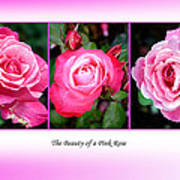 Pretty In Pink Roses Poster by Jo Collins