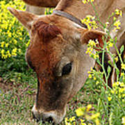 Pretty Jersey Cow - Vertical Poster