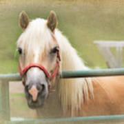Pretty Palomino Horse Photography Poster
