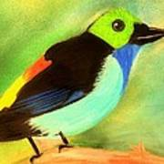 Pretty Paradise Tanager Poster