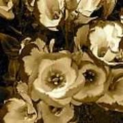 Pretty Petals 2 Poster