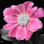 Pretty Pink Petals  Poster