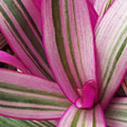 Pretty Plant Leaves 2 Poster