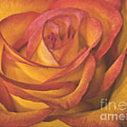 Pretty Rose Poster