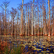 Pretty Swamp Scene Poster by Susanne Van Hulst