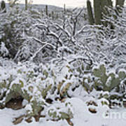 Prickly Pear And Saguaro Cacti Poster