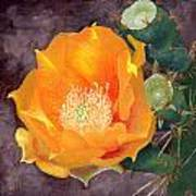 Prickly Pear Blossom Poster